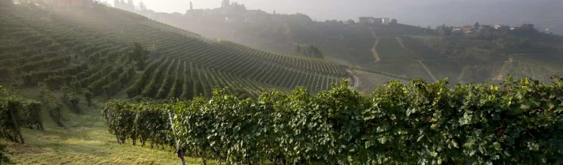 Barolo in the morning